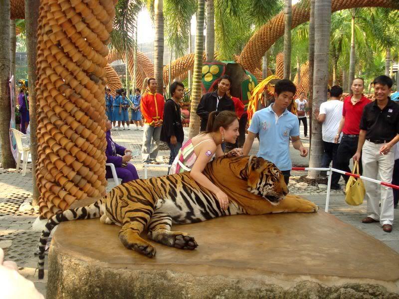 Kết quả hình ảnh cho trại hổ sriracha tiger zoo