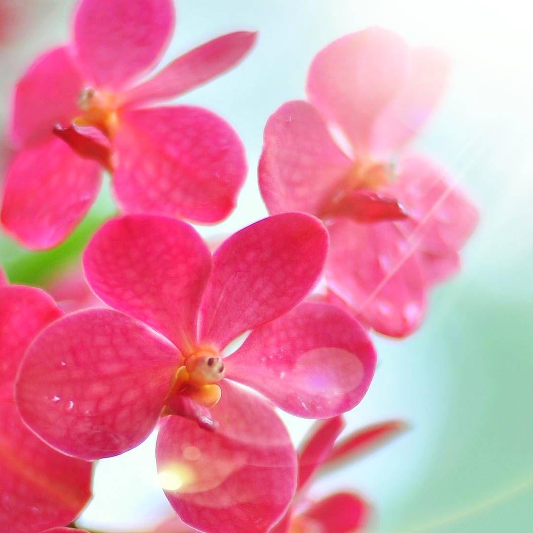 #orchid #flowers @bafalio24