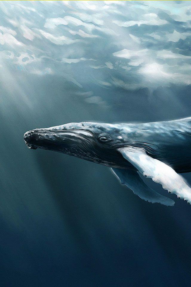 Free Ios 7 Humpback Whale Ocean Wallpaper Whale