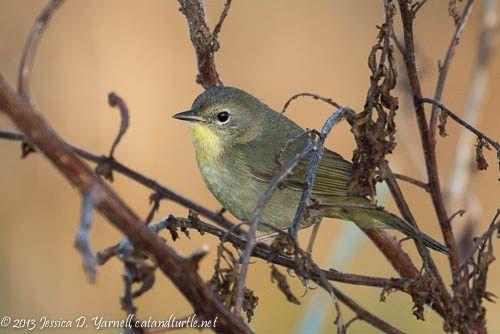 Central Florida Backyard Bird Identification | Backyard ...