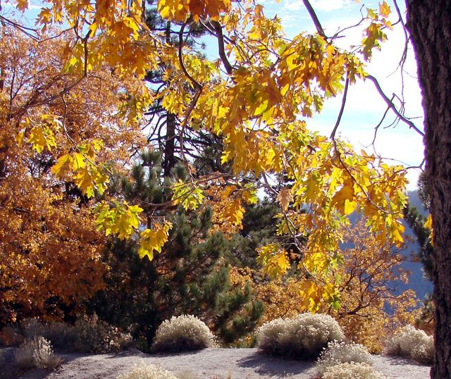 Get Your Fall Fix 10 Best Places To See Autumn Leaves In Southern California Autumn Leaves Fall Fall Season