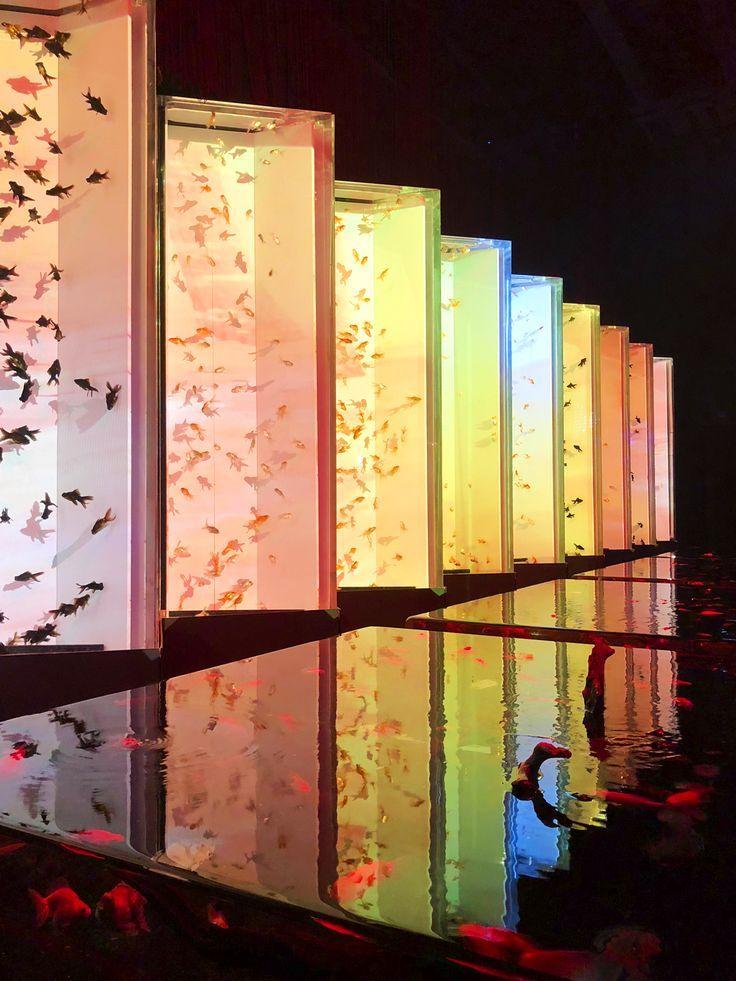 日本橋「アートアクアリウム」~江戸・金魚の涼~ レポー...,