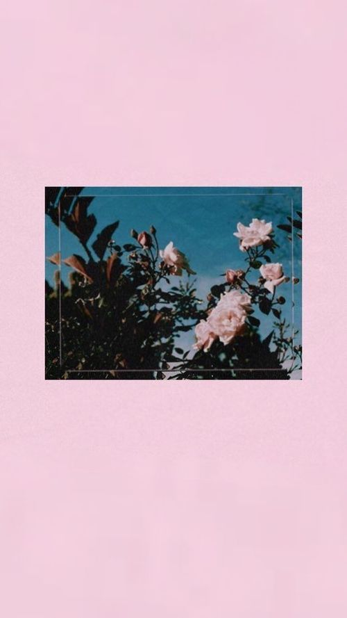 Image about pink in Wallpapers by Mili.Hustler