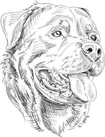 Pin En Rottweilers