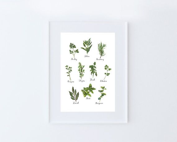 Culinary Herbs Collection White X Letter By Milesoflight