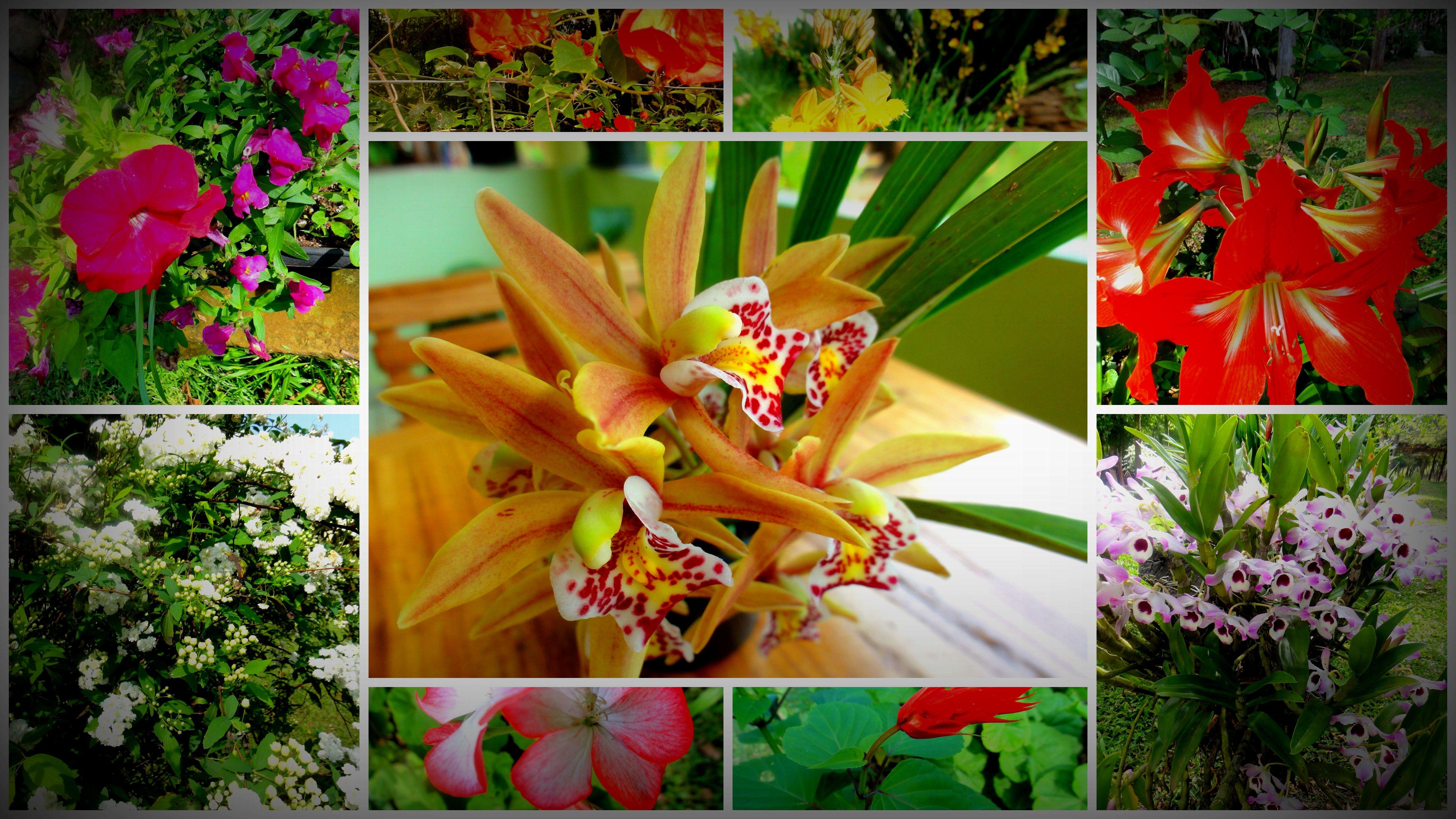 Algumas flores do Sítio dos Mallmann =)