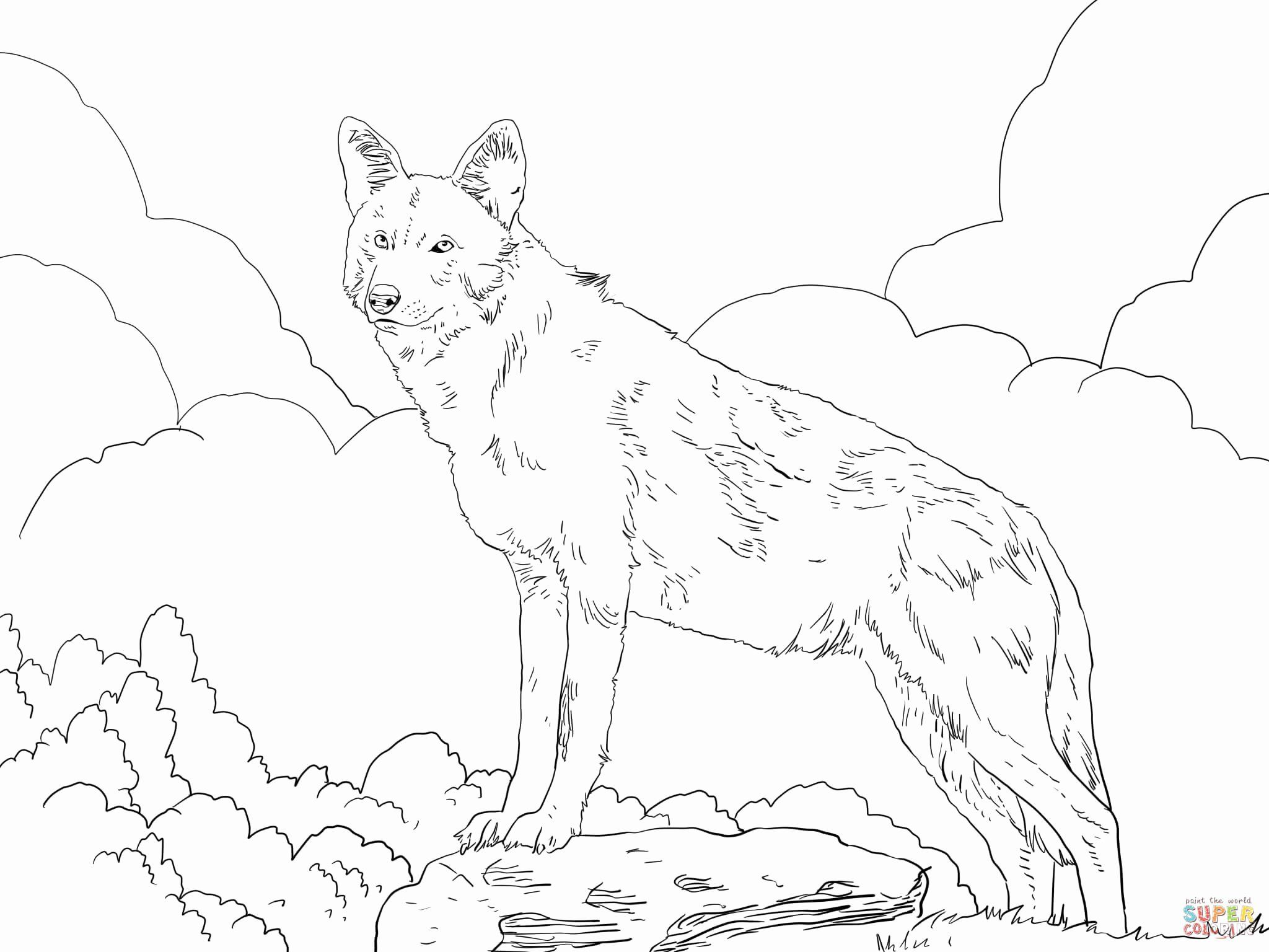 North America Coloring Page Unique North American Red Wolf Coloring Page Animal Coloring Pages Wolf Colors Coloring Pictures