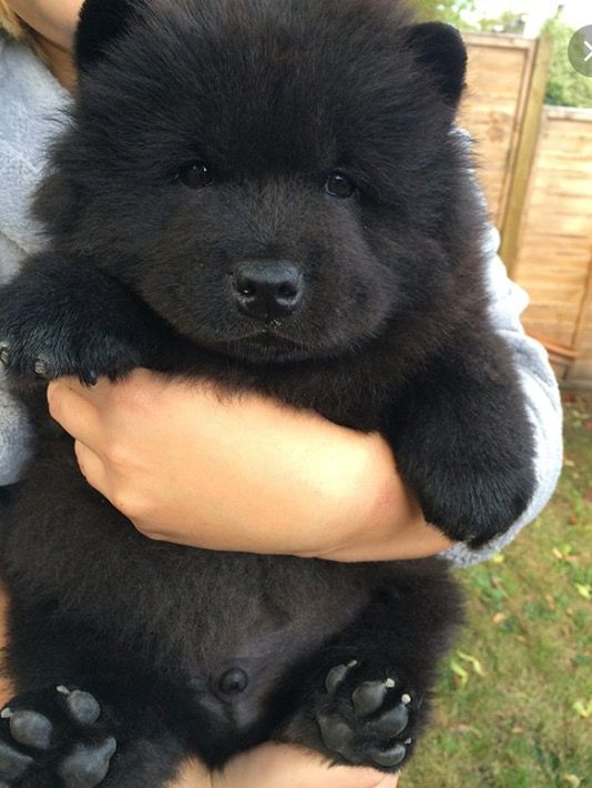 Top Akita Chubby Adorable Dog - d4cfa384887bf9d0ec7ab4ecc512bc1a  Photograph_653317  .jpg
