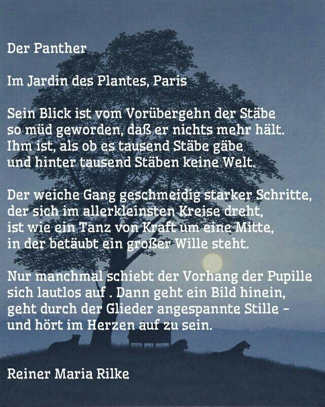 Der Panther Gedicht Von Rainer Maria Rilke Spruche Zitate Leben Motivieren Gedichte