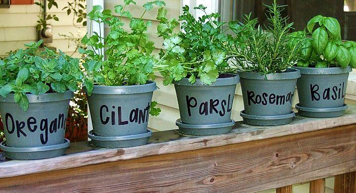 Mini huerto de plantas aromaticas en el balcon for Jardinera plantas aromaticas