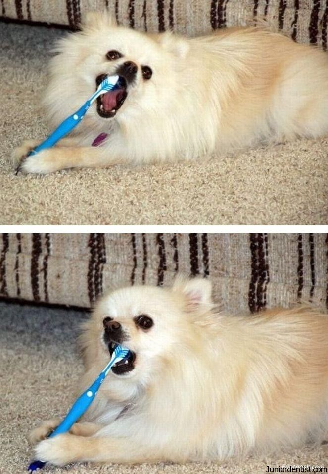 Cleaning Dog Teeth Is Not As Hard As You Think Cats Can Also Be
