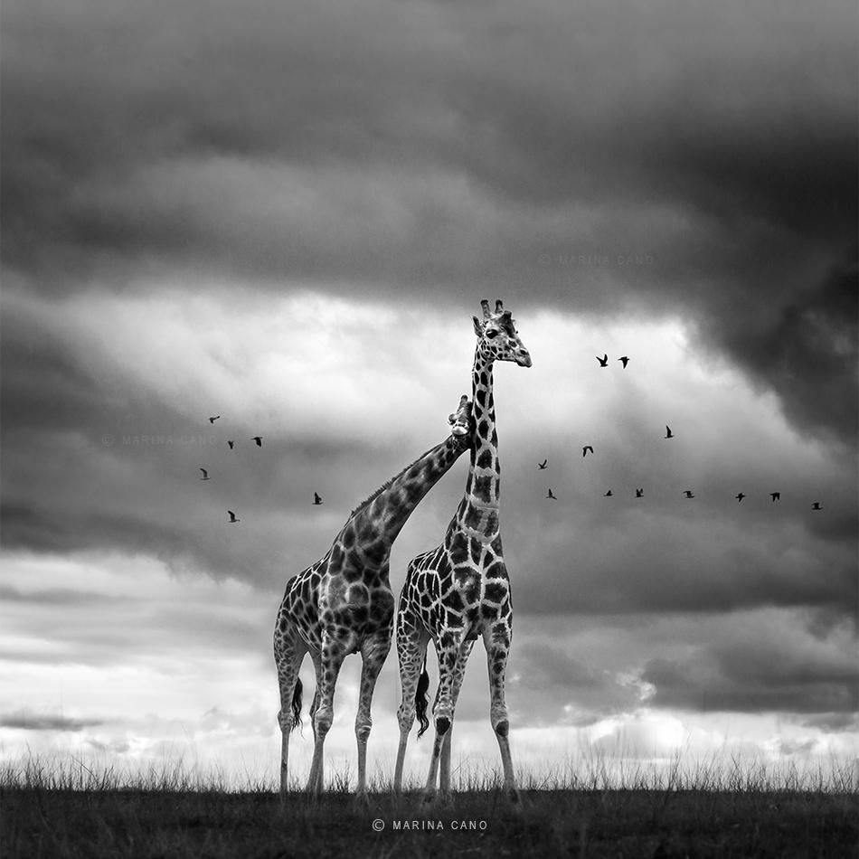 In Love With The Wild Animals Wildlife Photography Animal Photography
