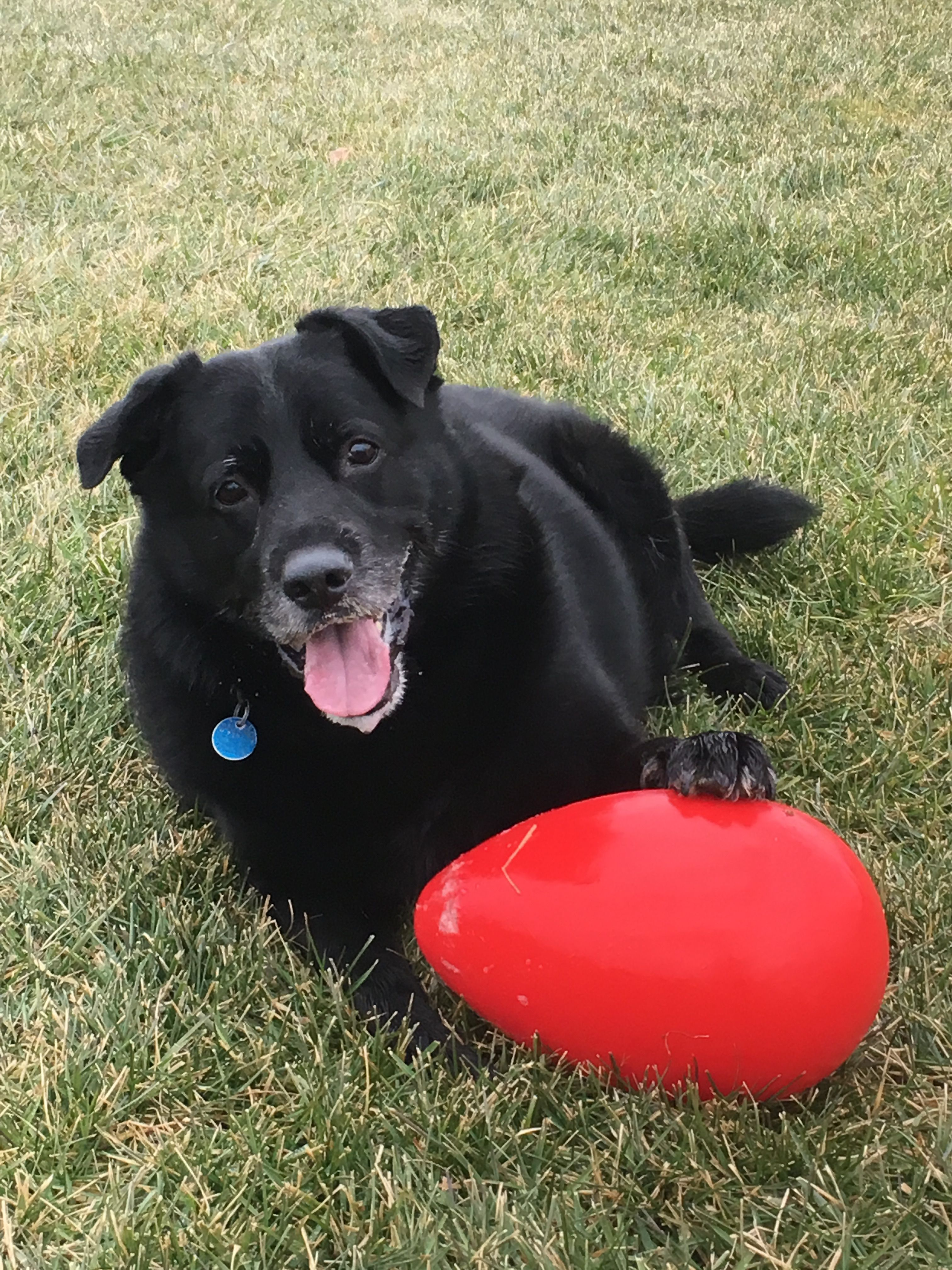 Check Out Our Review Of The Jolly Egg At Jenandonyx Com Dog Toys