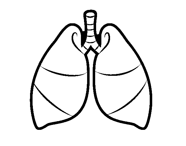 heart lung liver coloring pages - photo#36