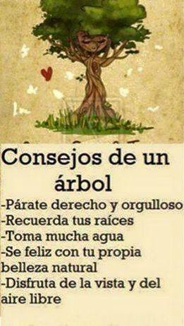 Consejos de un árbol !