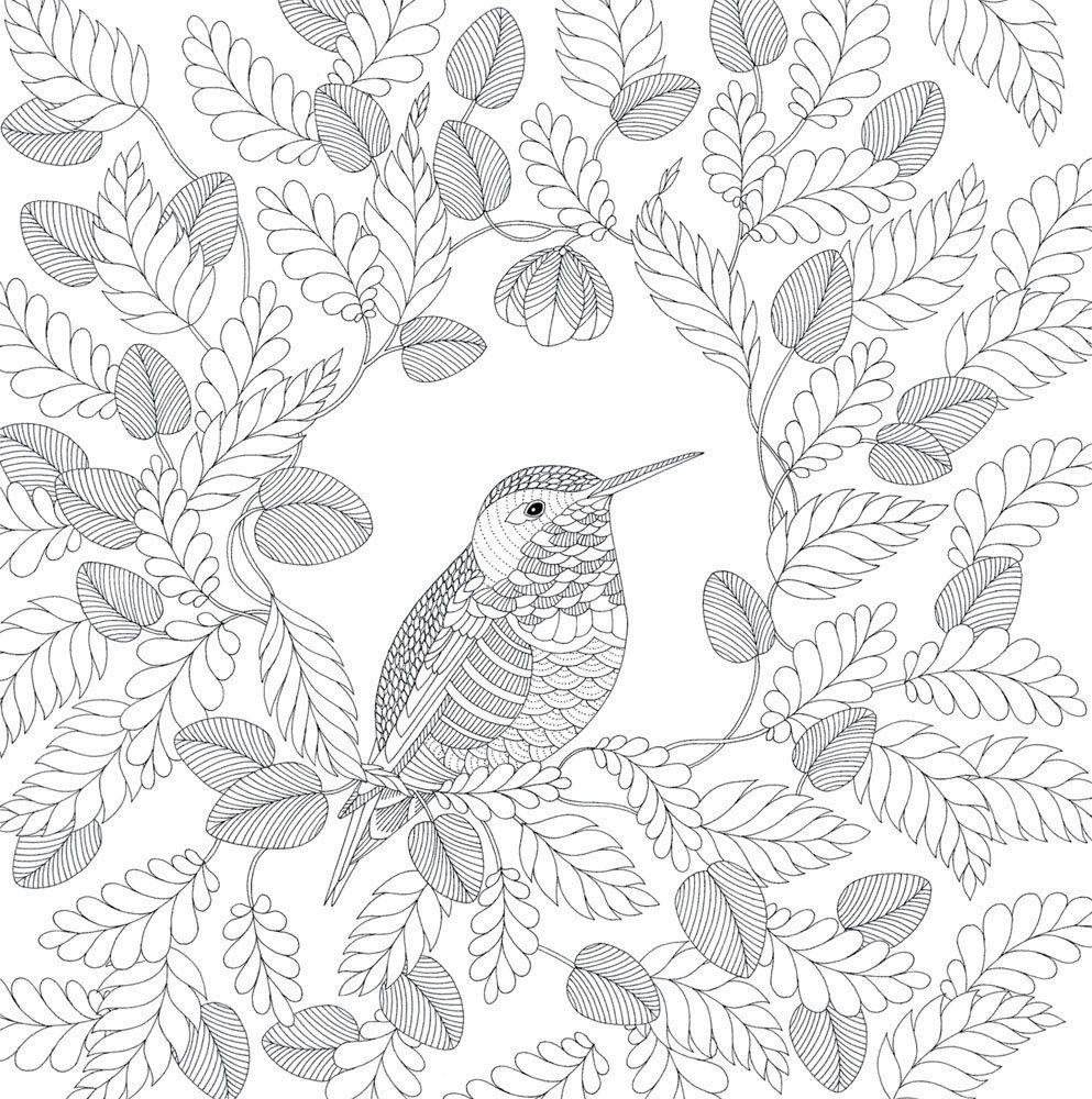 Icolor Birds 993 1000 Kleurplaten Kleurboek Kleuren