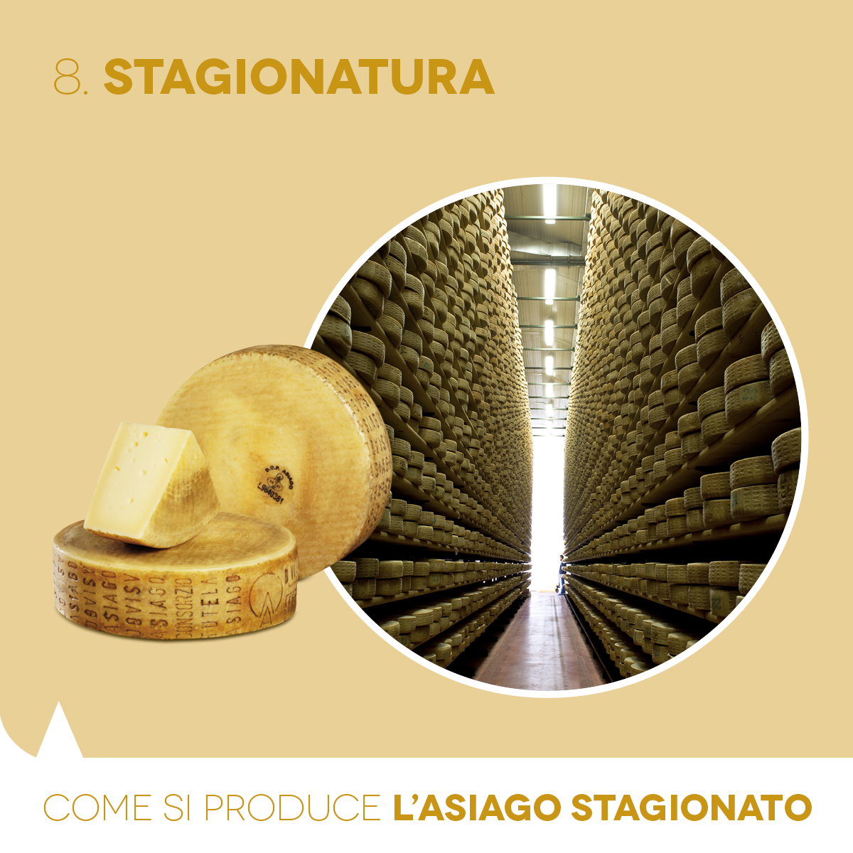 Aged PDO Asiago: how it is made. The seasoning.