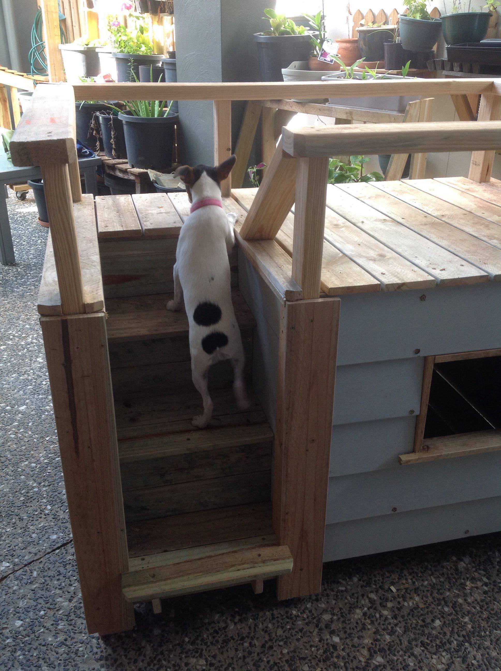 One of our dogs trying out the New two story Kennel with ...