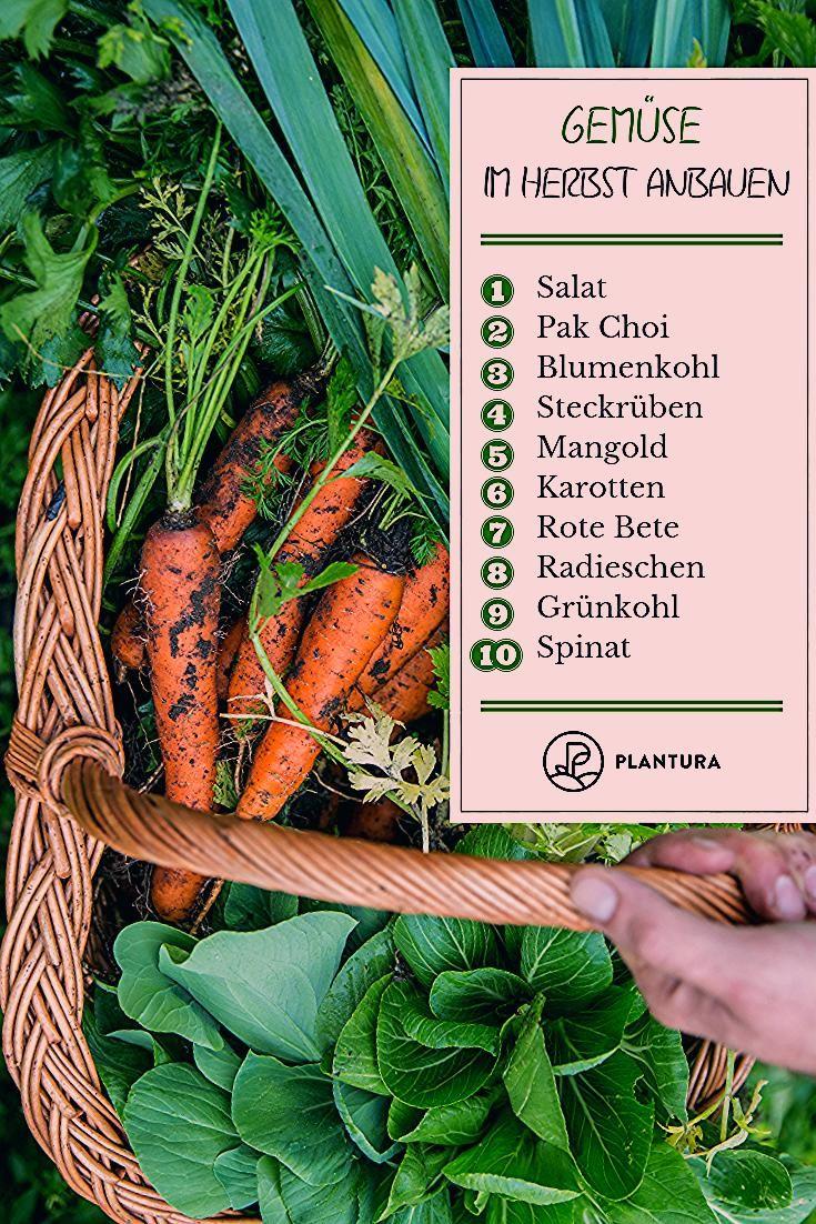 Photo of Gemüse im Herbst anbauen: Die 10 besten Pflanzen für die Nachkultur – Plantura