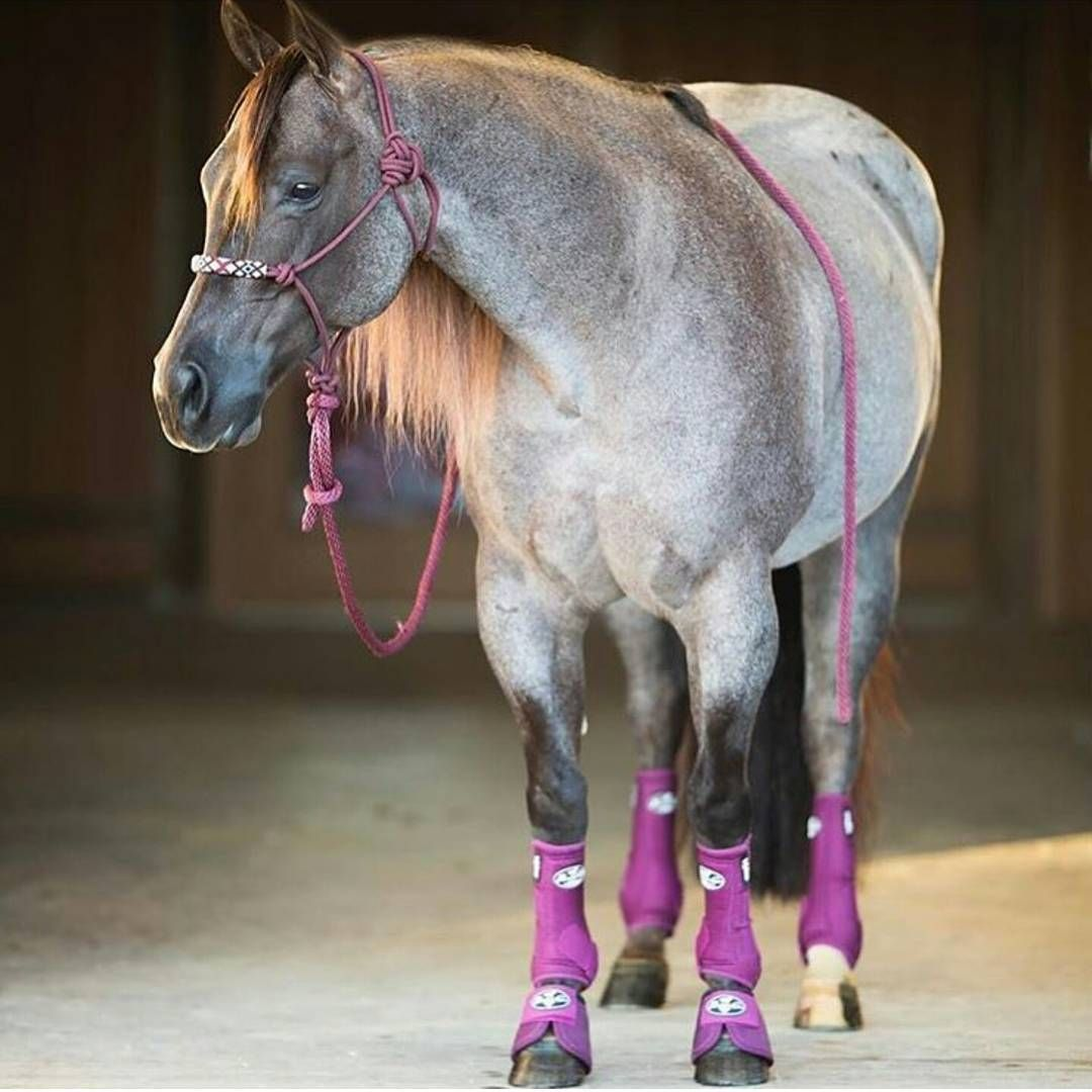 Profchoice Love These Bootup Smbboots Teamprofchoice Will Delete After Contest Everyone Go Look At Profchoic Rodeo Horses Aqha Horses Western Horse Tack