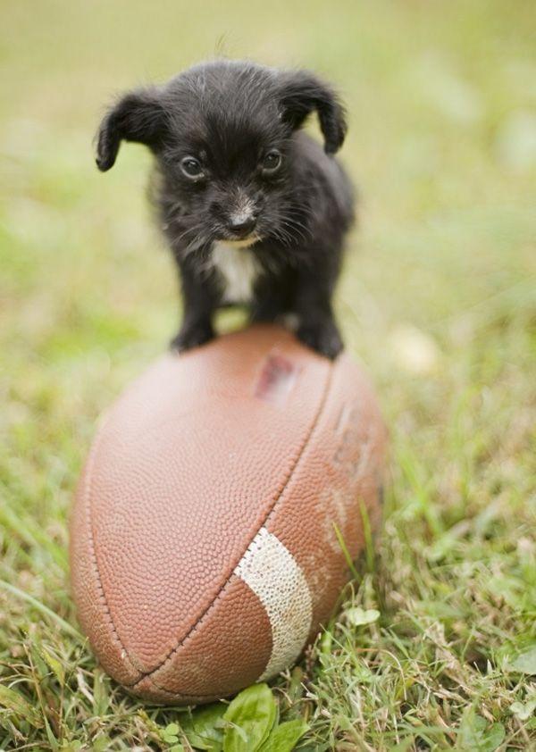TheTeeniestTiniestPuppiesBeingAdorablyTeenyTiny Puppy - 30 adorable pictures babies puppies will melt heart