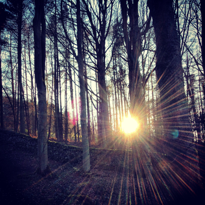 Sunset through the woods