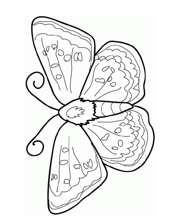 butterfly  cool coloring pages insect coloring pages