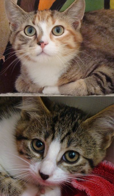Free Roaming Cats In Victoria British Columbia Sterilized And Saved With Images Cool Cats Cats Pets