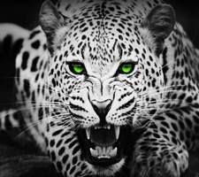 Browsing Wallpapers Page 37 Of 59 Zedge Cheetah Wallpaper Leopard Wallpaper Wild Animal Wallpaper