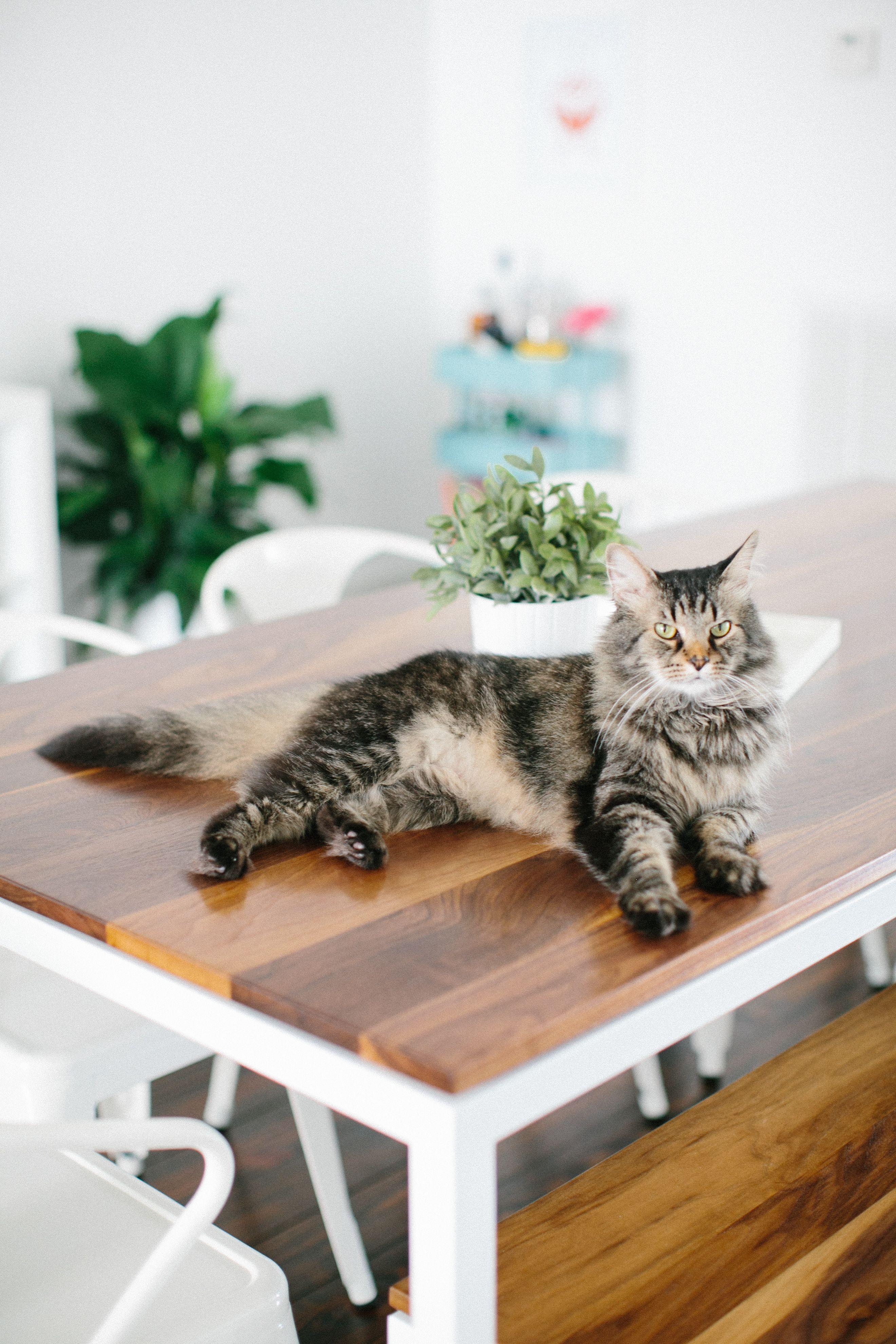 Hello kitty dining room  Ashley Roseus Houston Townhouse Tour  DESIGN INSPO  Pinterest