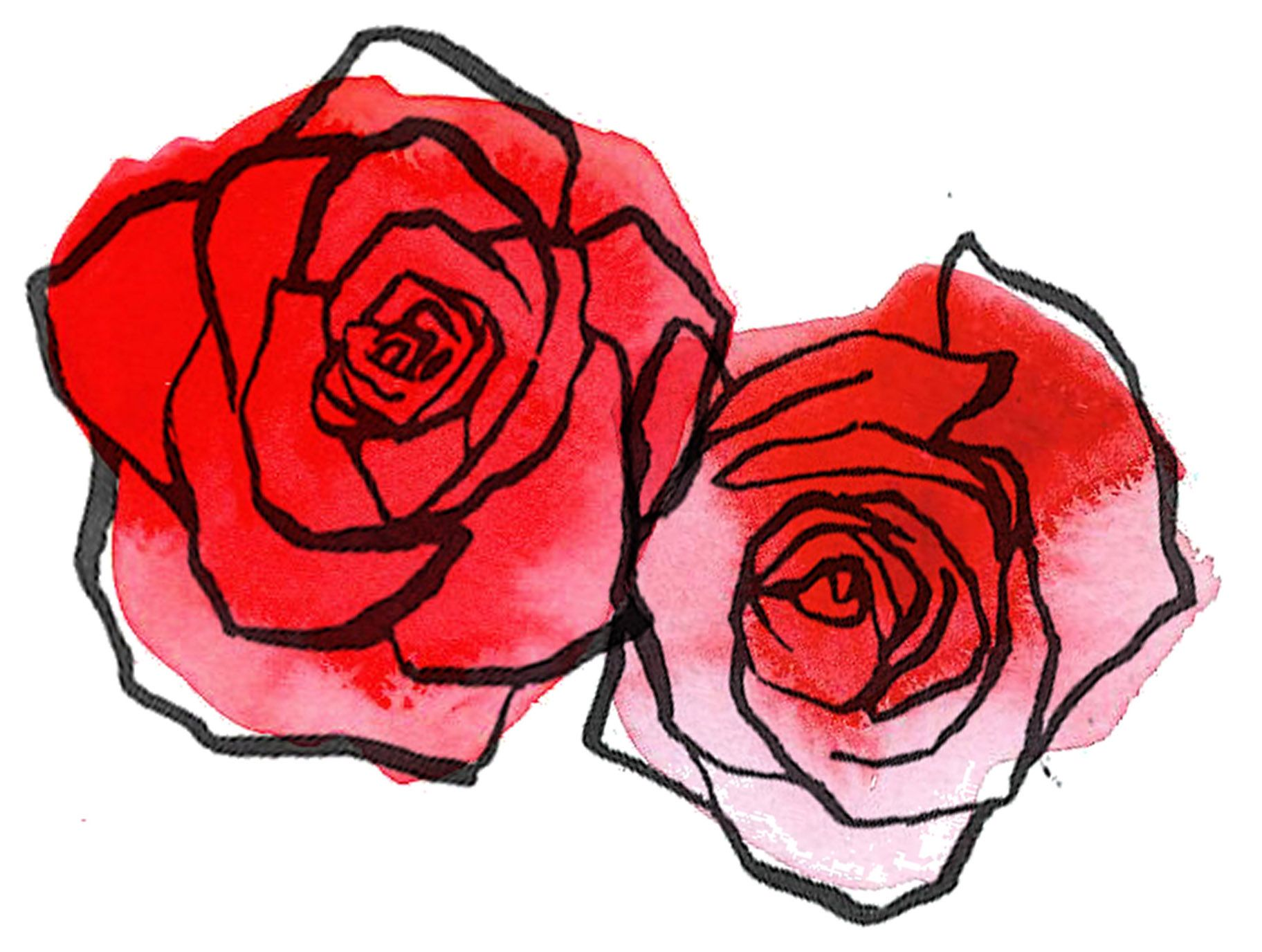 Roses American National Flower Red Rose Drawing Rose Drawing Realistic Rose Drawing