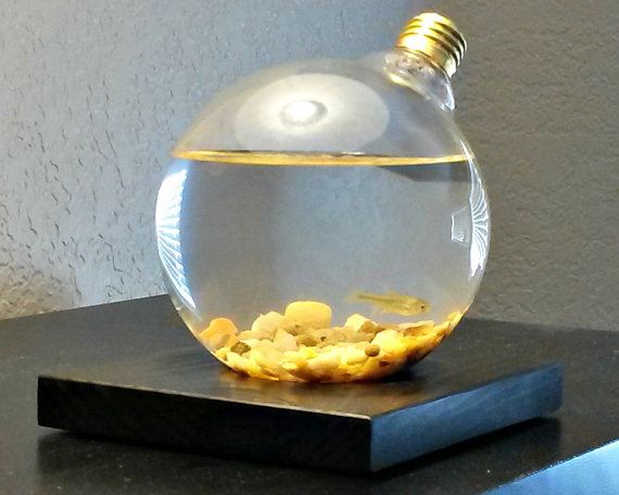 Light Bulb Miniature Aquarium Living Home and by KandMInnovations, $19.00
