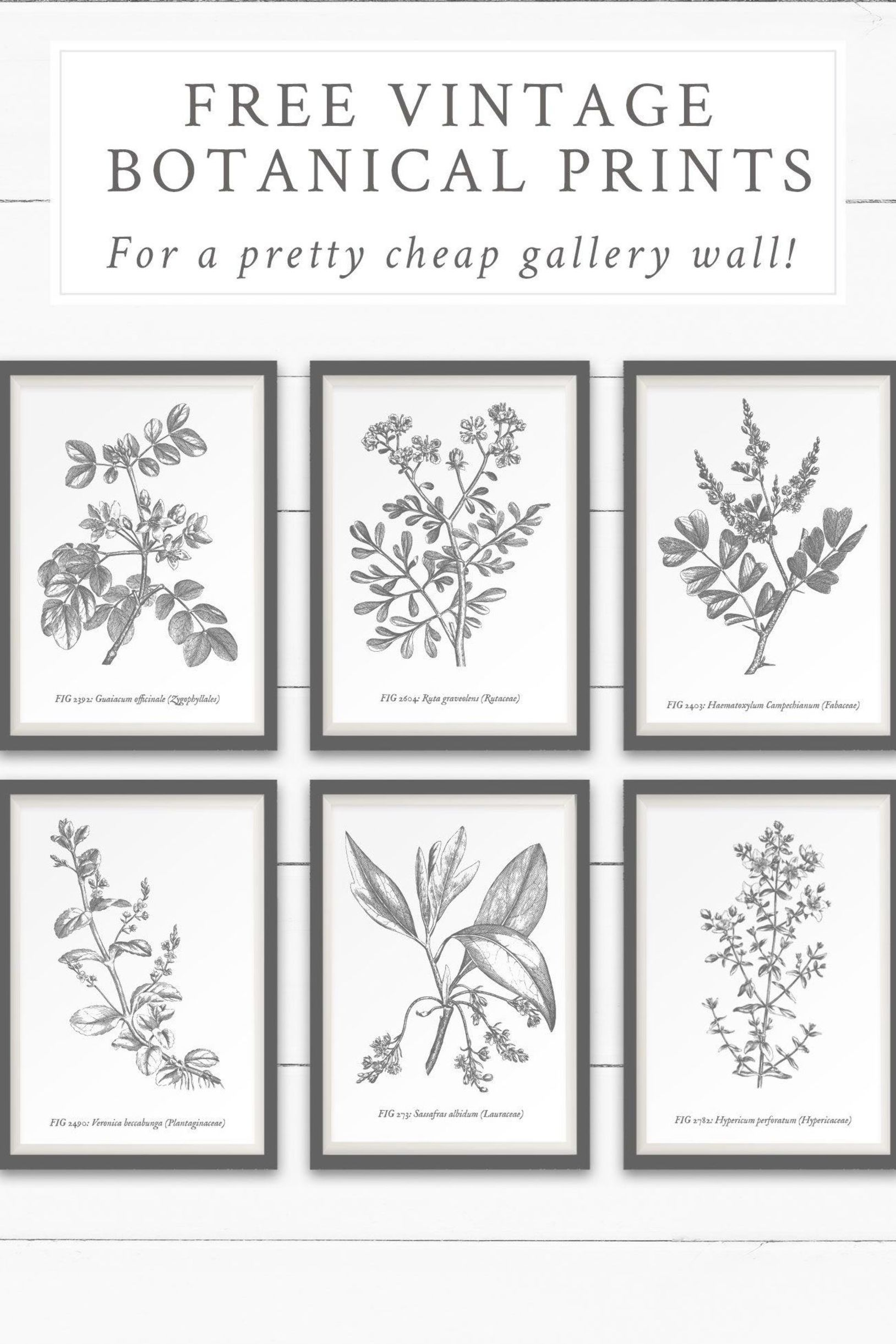 Download This Free Printable Vintage Botanical Wall Art To Create A Beautiful And Cheap Gallery Wall In Free Printable Wall Art Gallery Wall Botanical Wall Art