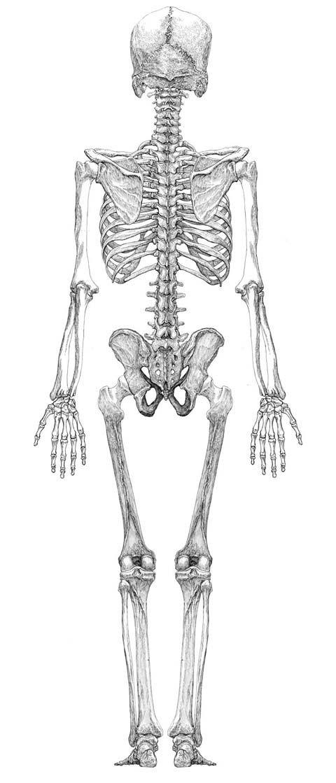 blog12061802.jpg | Ref - Anatomy | Pinterest | Anatomie, Bleistift ...