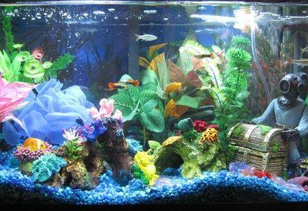 10 Gallon Fresh Water Aquarium With Neon Tetras Xray Tetras And