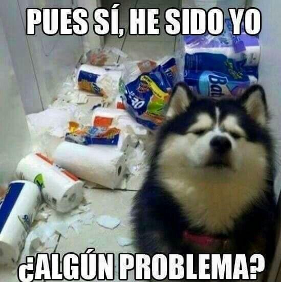 Pin By Mayela On Perros Lobo Dog Quotes Funny Memes Animal Memes
