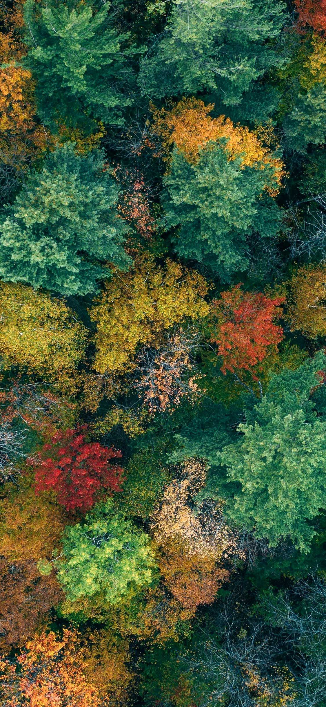 Iphone X Wallpaper Trees aerial view autumn Hd in 2020