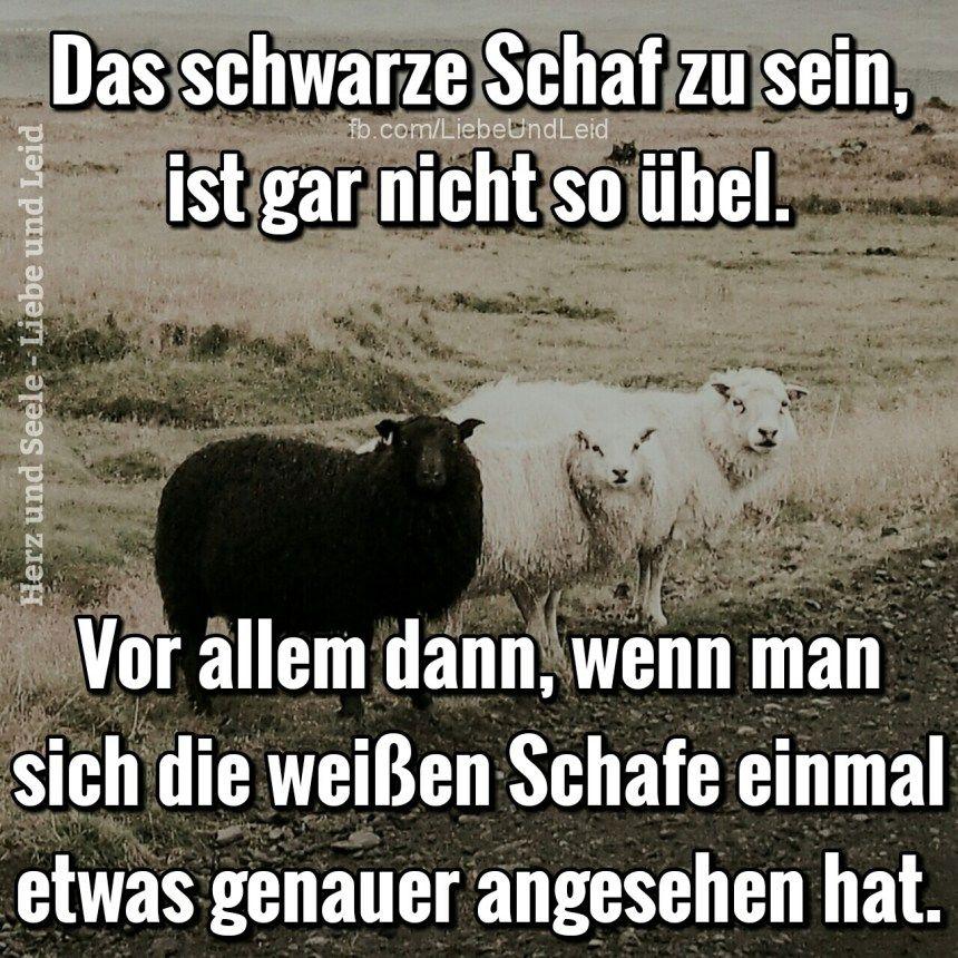 Das schwarze Schaf zu sein, ist gar nicht…