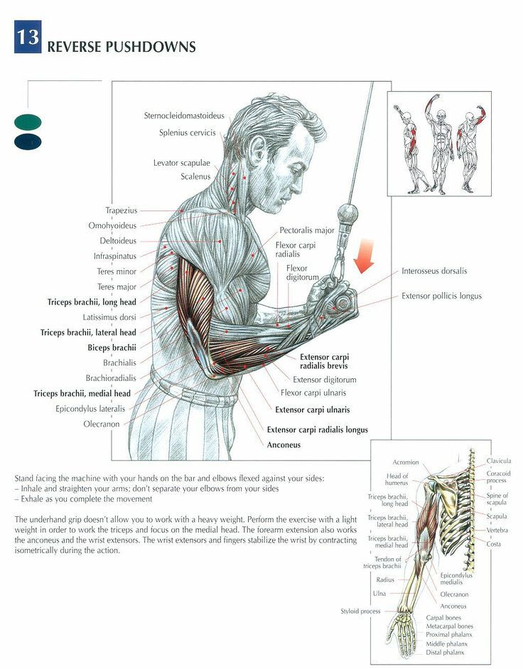 See more about Message board, Bodybuilding and Anatomy. | fast ...