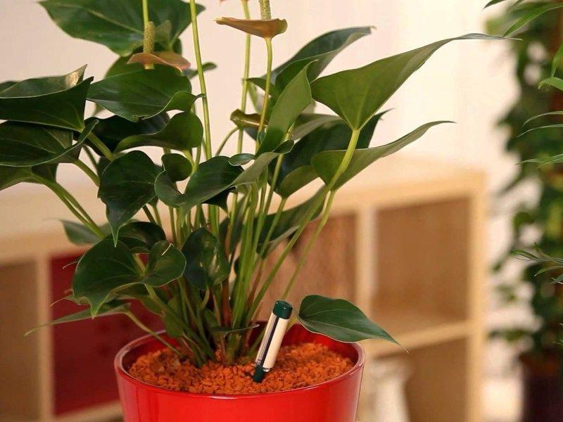 Astuces Pour Eviter Les Moucherons Dans Vos Plantes D Interieur