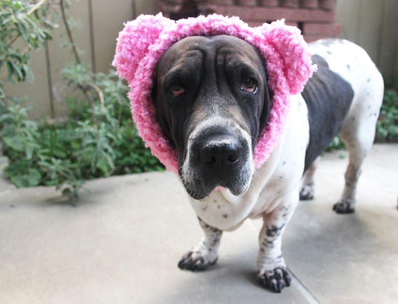 Teddy bear ear warmer for dogs - crochet - free pattern Twinkie Chan ...