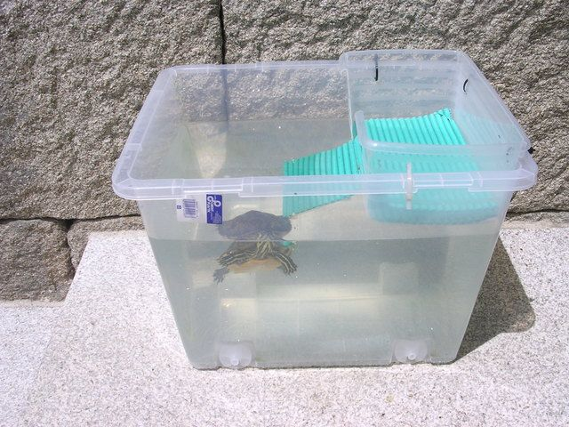 Peceras para tortugas tortugas pinterest - Como construir un terrario ...