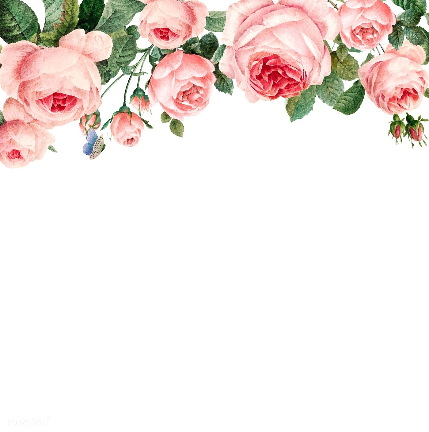 Hand Drawn Pink Roses Frame On White Background Vector Free
