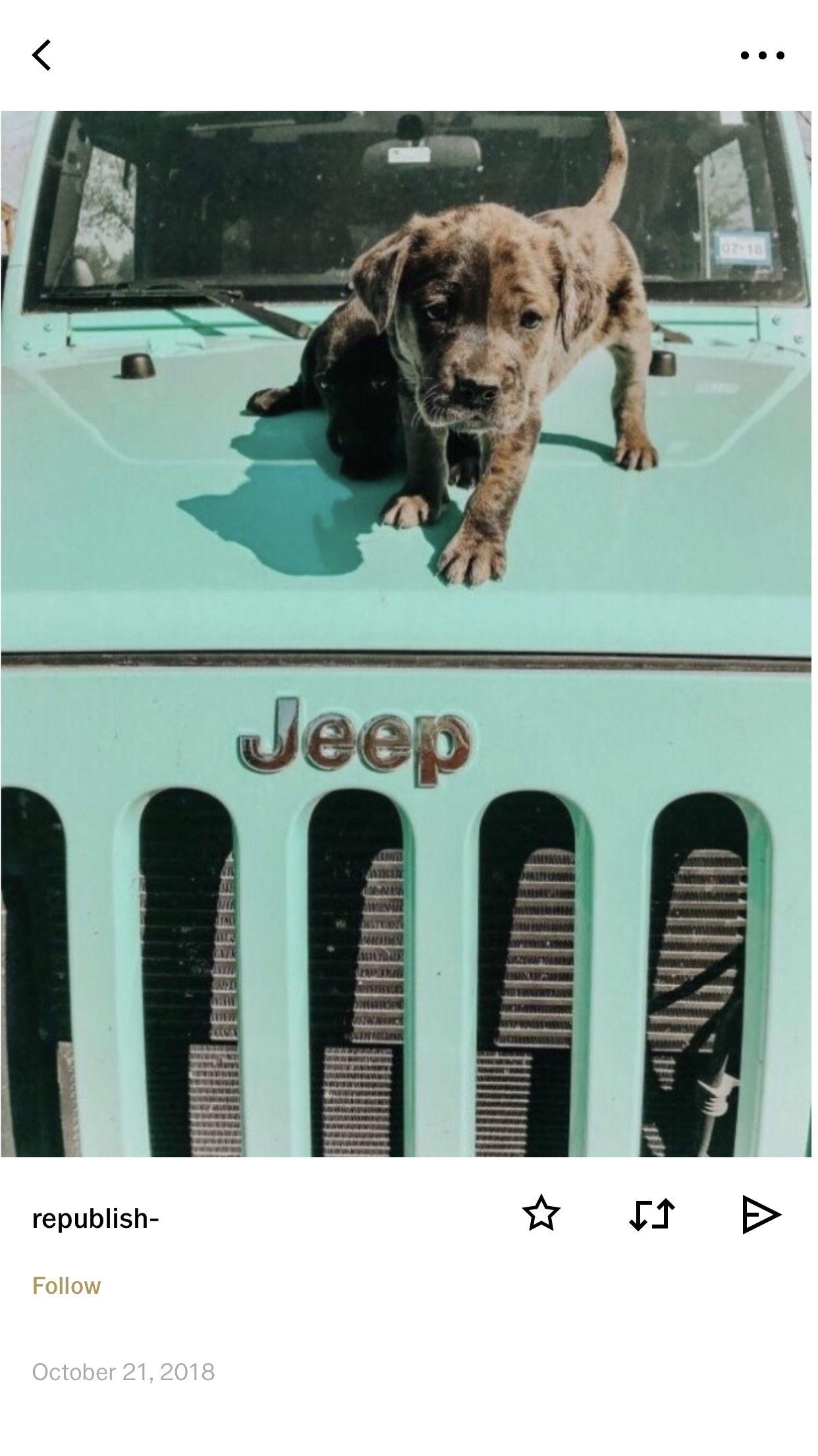 Idea By Hannah Rachel Mendoza On Doggos Puppers Puppies Cute