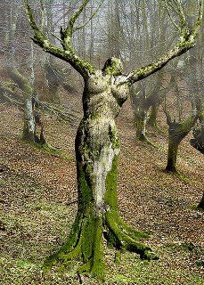 This tree resembles a Dryad, which in Greek mythology was a nature spirit who's life force was attached to a tree.
