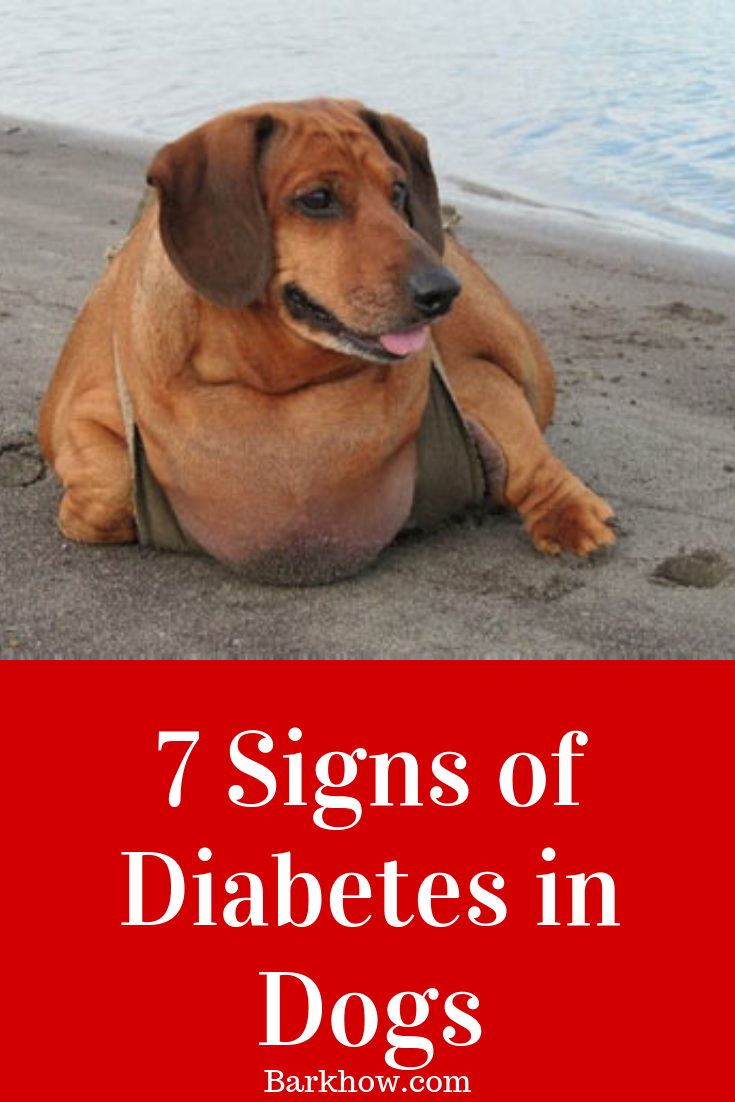 7 Early Signs of Diabetes in Your Dog Diabetic dog