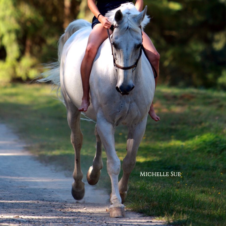 Dezi cantering in a shoot💕💕 (With images) Instagram