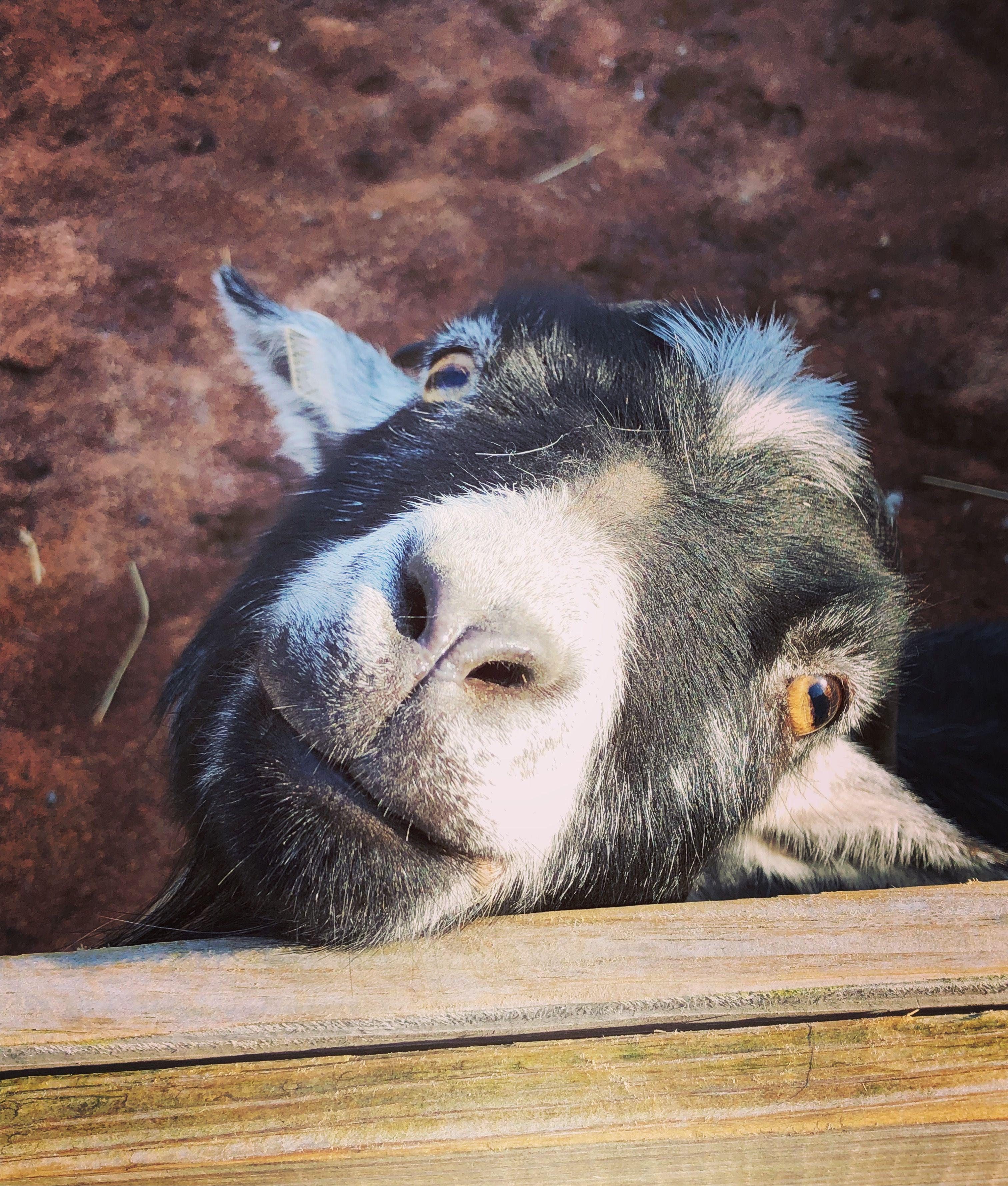 15+ Austin zoo animal crackers images