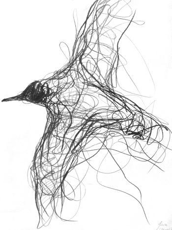Jason Gathorne Hardy Suffolk Artist Bird Drawings