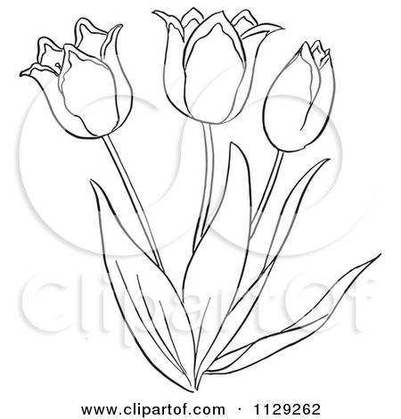 Cartoon Clipart Of An Outlined Tulip Flower Plant  Black And